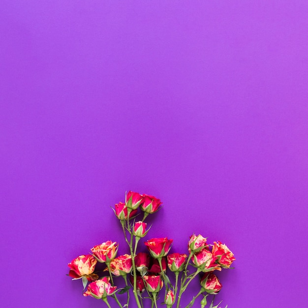 Top view bouquet of carnation flowers on violet copy space background Free Photo