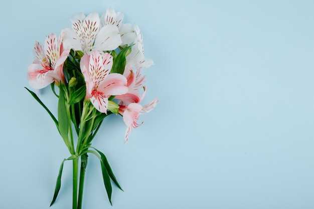 Top view of a bouquet of pink color alstroemeria flowers on blue background with copy space Free Photo