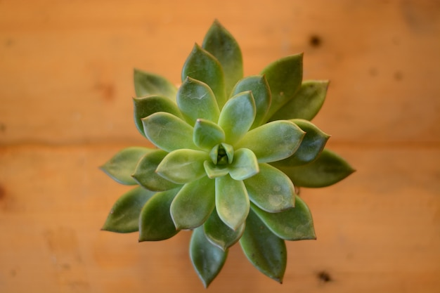Top view of cactus in flower pot on wood background Premium Photo
