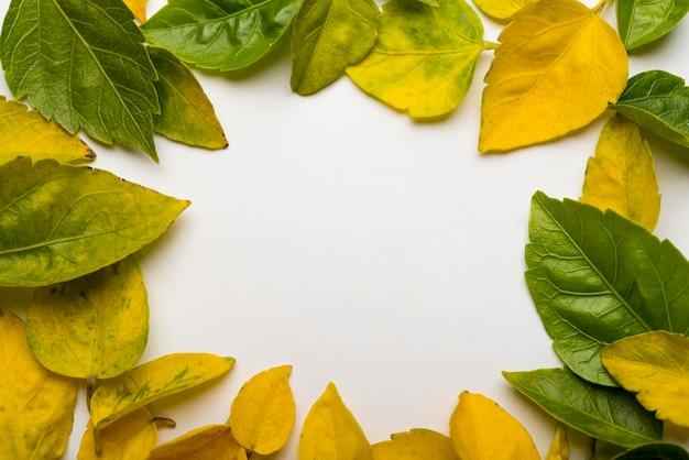 Вид сверху коллекция осенних листьев Бесплатные Фотографии