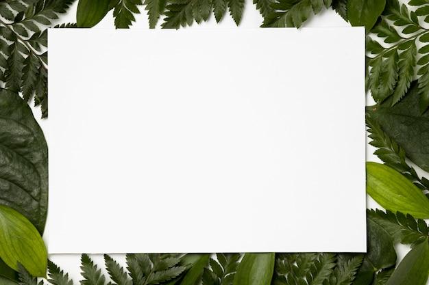 Вид сверху коллекция листьев фона Бесплатные Фотографии