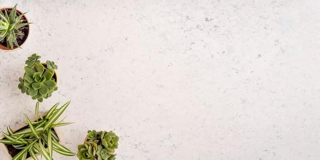 복사 공간 식물의 상위 뷰 모음 프리미엄 사진