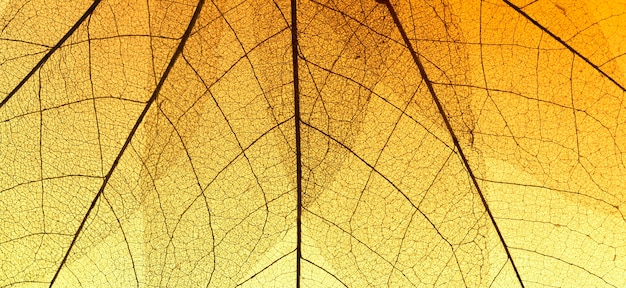 Top view of colored transparent leaf texture Free Photo