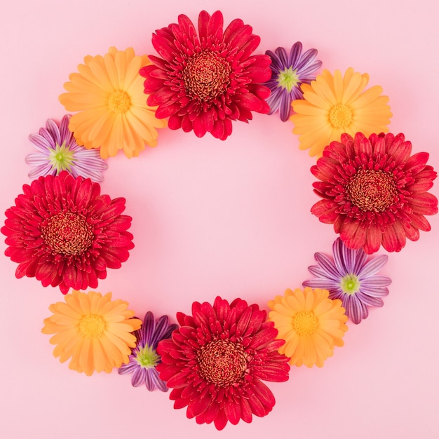 Top view colorful flowers Free Photo