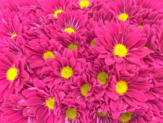 Top view of colorful pastel flowers Premium Photo