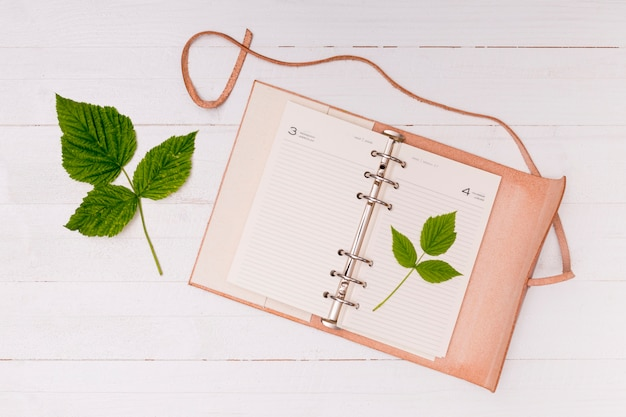 Top view common beech leaves with notebook Free Photo