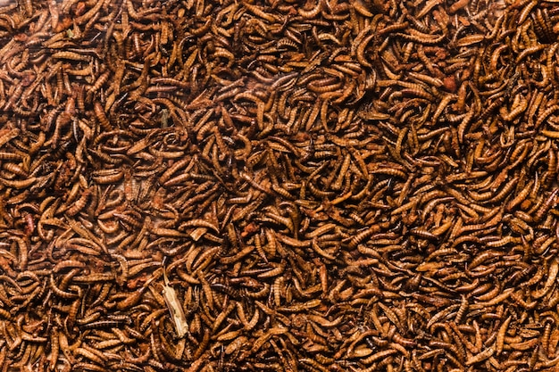 Top view cooked insects larvae Free Photo