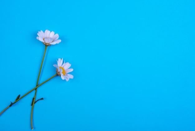 青色の背景に平面図コピースペースカモミール 無料写真