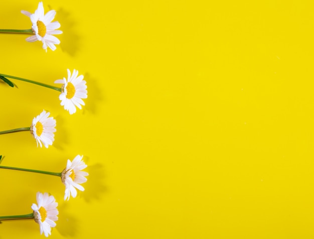 Top view copy space chamomile on a yellow background Free Photo