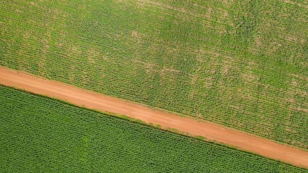 Top view of corn fields Premium Photo