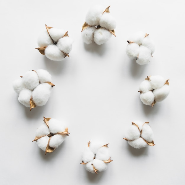 Top view of cotton flower Free Photo