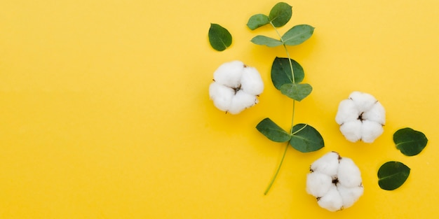 Top view cotton flowers on yellow background Free Photo