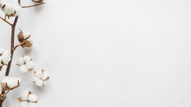 Top view of cotton flowers Premium Photo