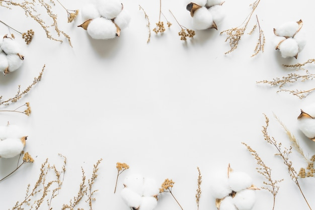 Top view of cotton flowers Free Photo