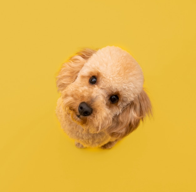 Top view of cute dog looking up Free Photo
