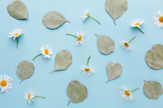 Вид сверху ромашки и листья Бесплатные Фотографии