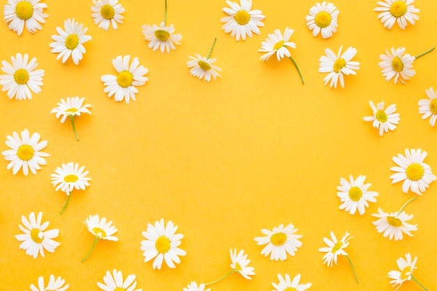 Top view daisies frame Premium Photo