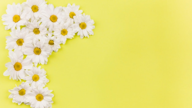 Top view of daisy flowers Free Photo