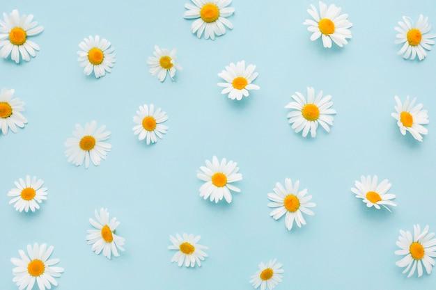 Вид сверху цветы ромашки Premium Фотографии