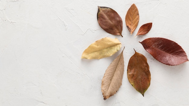 Top view of dry autumn leaves with copy space Free Photo