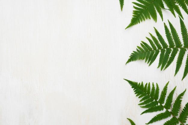 Vista dall'alto di foglie di felce con copia spazio Foto Gratuite