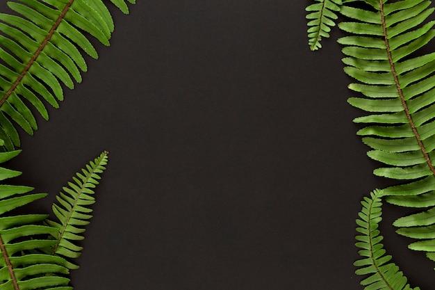 Vista dall'alto della pianta di felce foglie con copia spazio Foto Gratuite