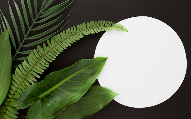 Top view of fern with multiple leaves and copy space Free Photo