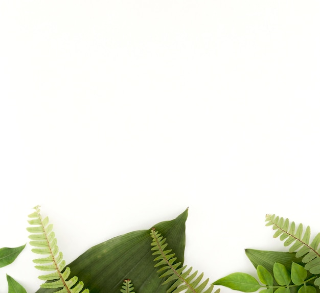 Top view of ferns and leaves with copy space Free Photo