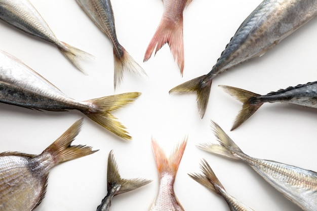 Top view of fish tails in circle Free Photo
