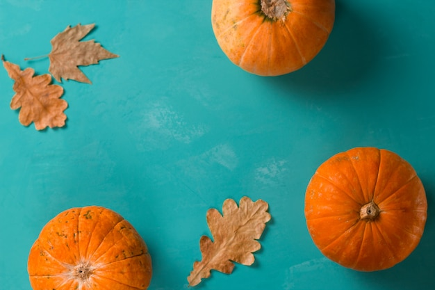 Top view flat lay three pumpkins on a blue background copy space, autumn background Premium Photo
