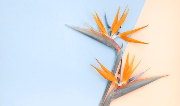 Top view of flatlay, orange strelizia on color paper. Free Photo