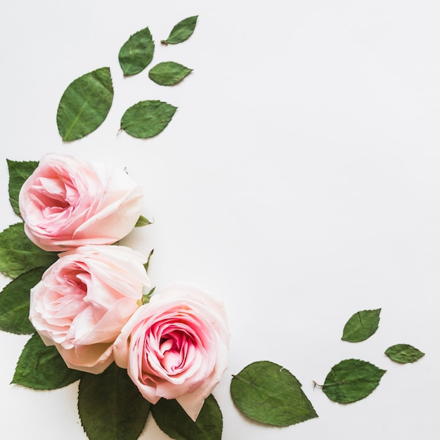 Top view of flowers and leaves Free Photo