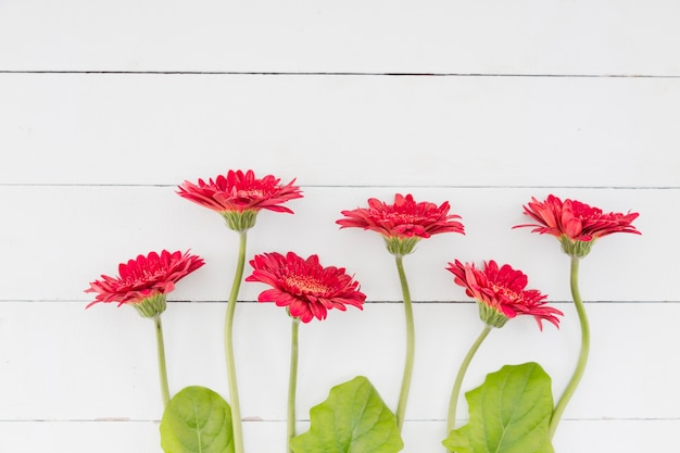 Top view flowers line on wooden background Free Photo