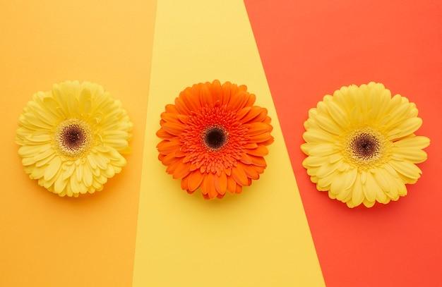 책상에 상위 뷰 꽃 무료 사진