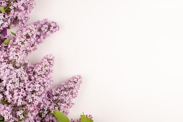 Вид сверху цветы фиолетовые красивые на белом полу Бесплатные Фотографии