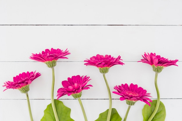 Top view flowers on wooden background Free Photo
