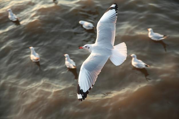 Top view flying seagulls in ocean Premium Photo