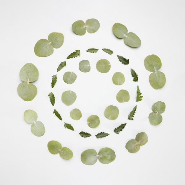녹색으로 만들어진 평면도 프레임 무료 사진