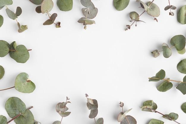 葉の上面図フレーム 無料写真