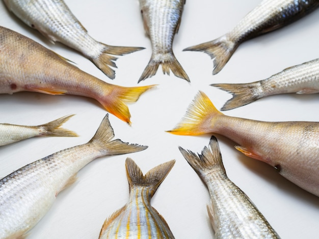 Top view fresh fish tails frame Free Photo