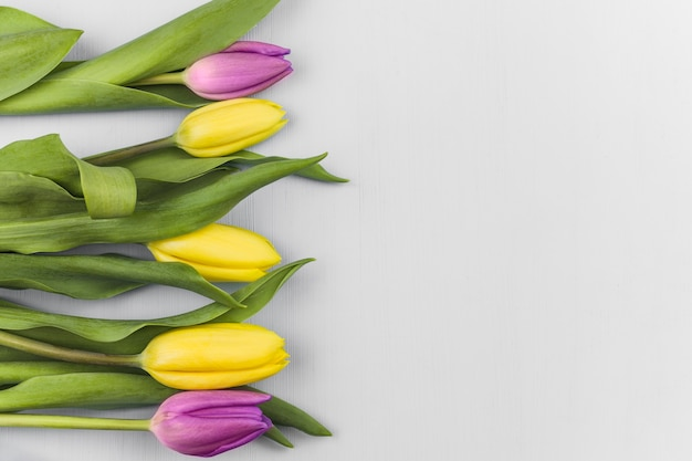 Top view of fresh tulips Free Photo
