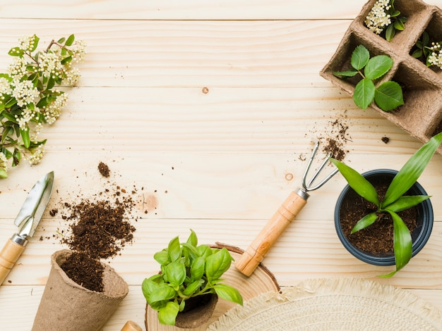 Top view gardening tools and plants Free Photo