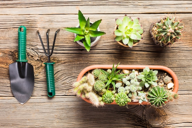 Top view of gardening tools on the wooden floor Free Photo