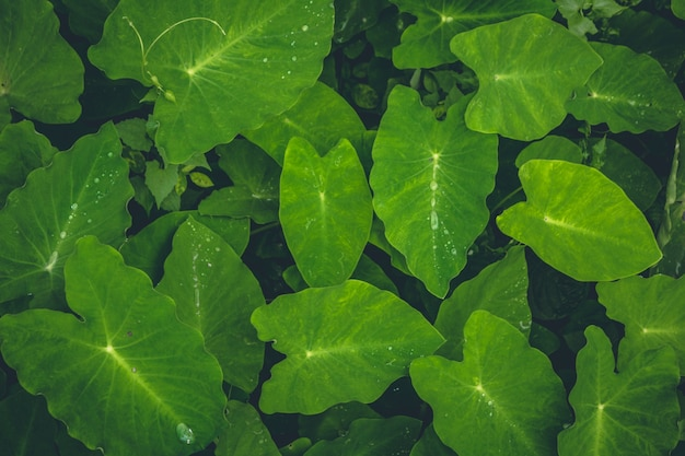 Top view of green forest plants Free Photo