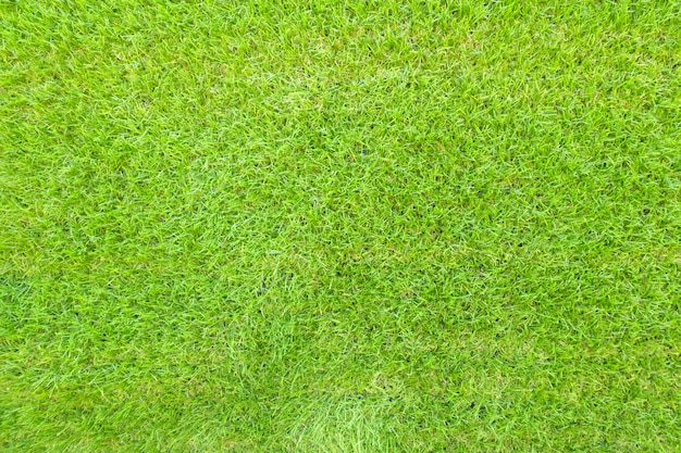 Top View Of Green Grass Background Texture. Photo