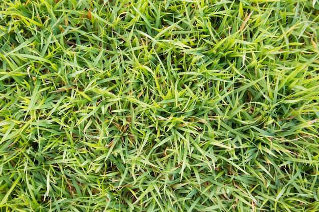上面図緑草 Premium写真