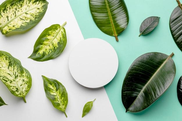 上面図緑の葉の配置 無料写真