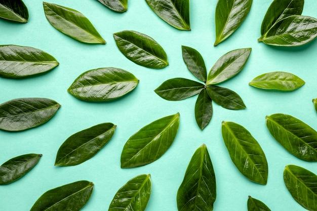 上面図緑の葉の品揃え 無料写真