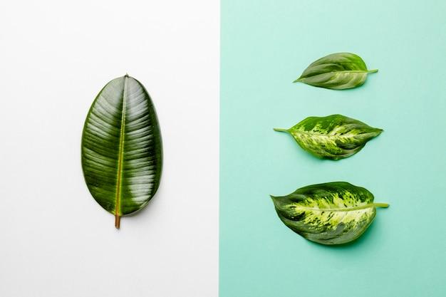 Vista dall'alto foglie verdi su sfondo bicolore Foto Gratuite