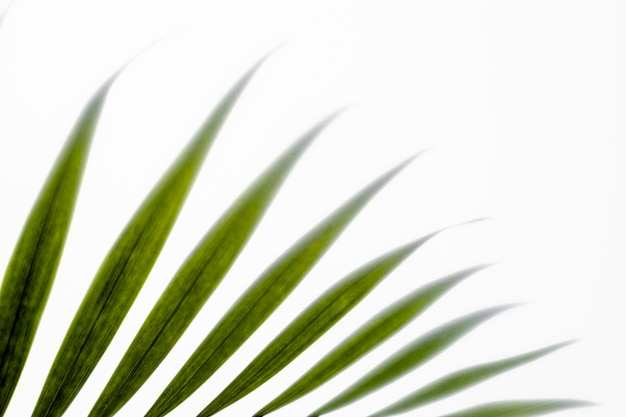 コピースペースと白の上面図緑の葉 無料写真